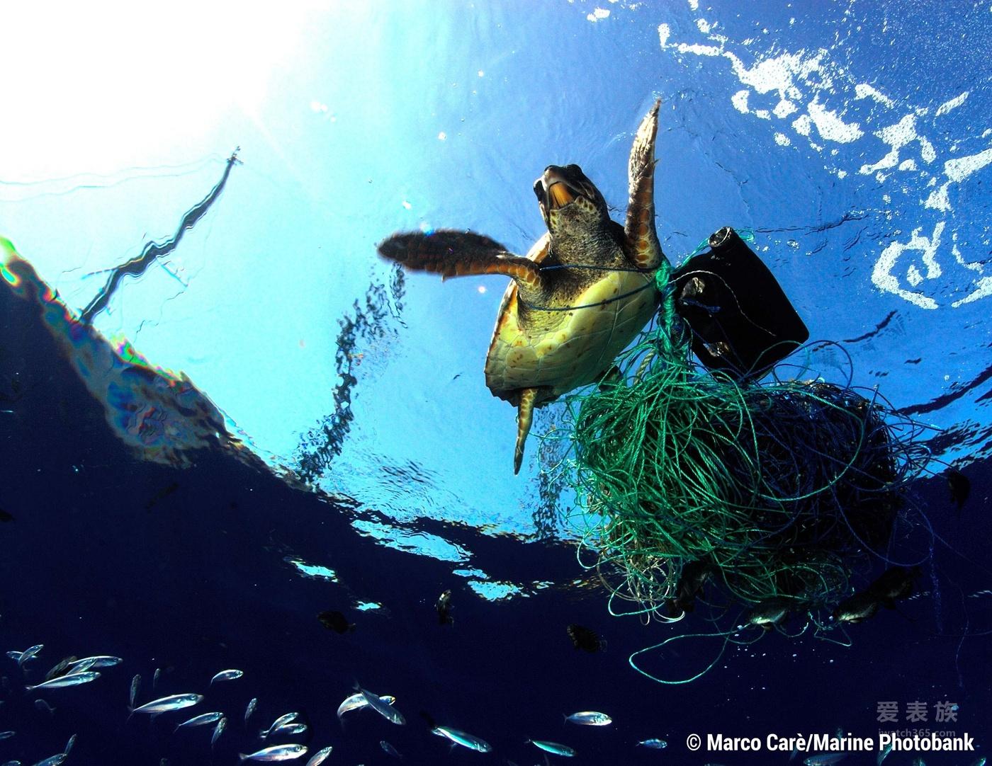 百年灵与海洋保育协会:对洁净健康的海洋满怀热忱